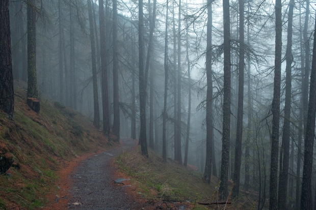 Foggy wooded path!