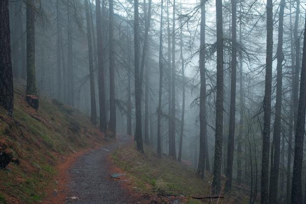 Foggy wooded path!